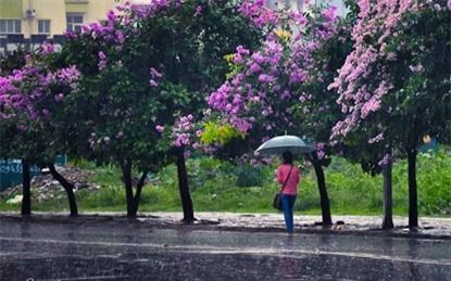 Bắc Bộ nhiều lúc có mưa, Hà Nội tiết trời dịu mát