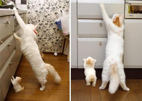 tan chay voi nhung ban sao meo con xoan xit ben bo me khong roi 1 Tan chảy với những bản sao mèo con xoắn xít bên bố mẹ không rời