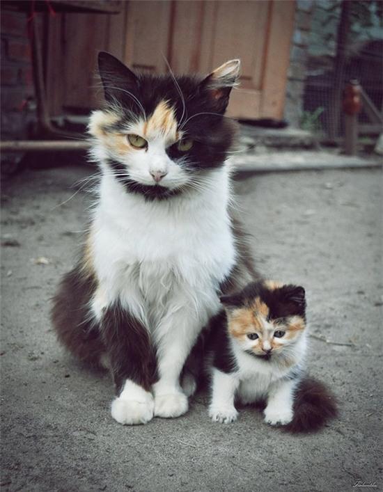 tan chay voi nhung ban sao meo con xoan xit ben bo me khong roi 2 Tan chảy với những bản sao mèo con xoắn xít bên bố mẹ không rời