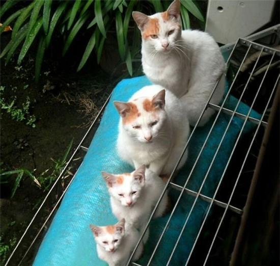 tan chay voi nhung ban sao meo con xoan xit ben bo me khong roi 5 Tan chảy với những bản sao mèo con xoắn xít bên bố mẹ không rời