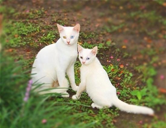 tan chay voi nhung ban sao meo con xoan xit ben bo me khong roi 9 Tan chảy với những bản sao mèo con xoắn xít bên bố mẹ không rời