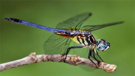 Các loài côn trùng cũng có thể đang chung số phận
