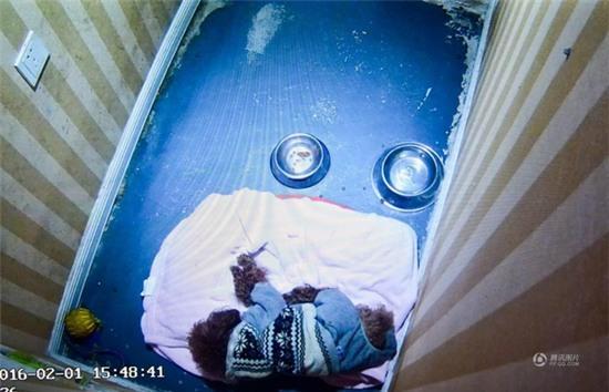 Cháy phòng khách sạn dành cho thú cưng dịp Tết Nguyên Đán - Ảnh 6.