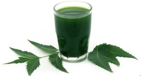 2. Lá neem: Uống nước lá neem vào đầu buổi sáng giúp bạn điều hòa được lượng đường trong máu.