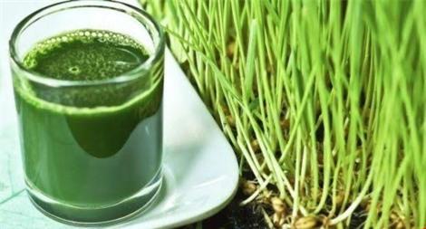 6. Cỏ lúa mì: Loại cỏ này có đặc tính chữa bệnh và nó còn chứa acid amin và các chất chống viêm. Uống một ly nước ép cỏ khi bao tử rỗng giúp bạn thanh lọc hệ tiêu hóa.