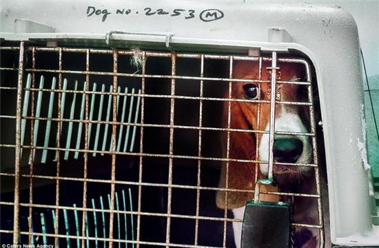 Nỗi buồn của 156 chú chó thí nghiệm lần đầu tiên được nhìn thấy ánh sáng mặt trời - Ảnh 5.