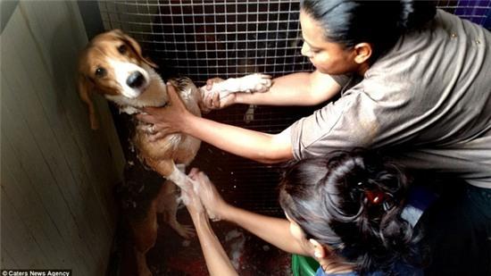 Nỗi buồn của 156 chú chó thí nghiệm lần đầu tiên được nhìn thấy ánh sáng mặt trời - Ảnh 6.