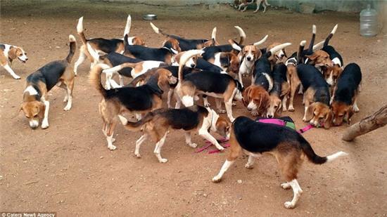 Nỗi buồn của 156 chú chó thí nghiệm lần đầu tiên được nhìn thấy ánh sáng mặt trời - Ảnh 8.