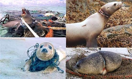 Bạn sẽ giật mình khi biết đến cách con người đã hủy hoại sinh vật biển - Ảnh 1.