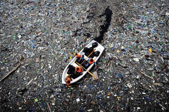 Bạn sẽ giật mình khi biết đến cách con người đã hủy hoại sinh vật biển - Ảnh 2.