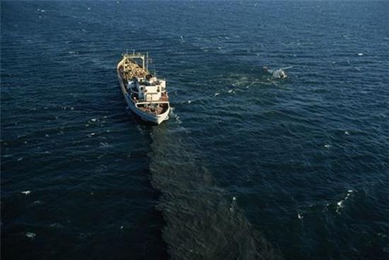 Bạn sẽ giật mình khi biết đến cách con người đã hủy hoại sinh vật biển - Ảnh 8.