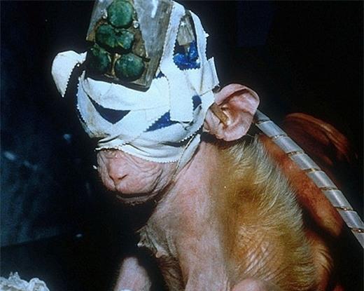 Chú khỉ đáng thương làm vật thí nghiệm. (Ảnh: Internet)
