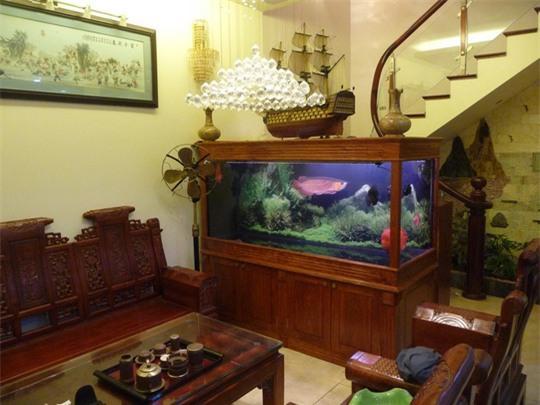 Kiêng kỵ khi đặt bể cá trong nhà ít người để ý