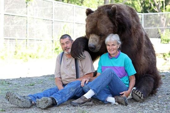 Đôi vợ chồng chung sống với gấu khổng lồ hơn 600kg dưới một mái nhà hàng chục năm qua - Ảnh 1.