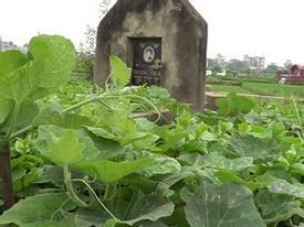 Dân Hà Nội trồng rau sạch trên mộ người chết