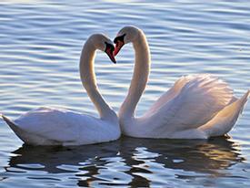 Giây phút yêu đương của loài vật