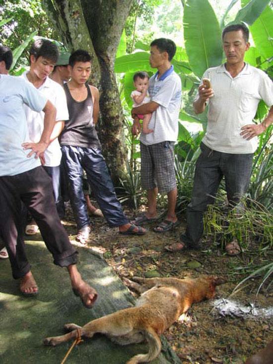 Hiện tượng lạ hàng loạt chó, mèo dại vô chủ xuất hiện ở Thái Nguyên