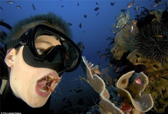 Há miệng... nhờ tôm đánh răng                                             Há miệng... nhờ tôm đánh răng