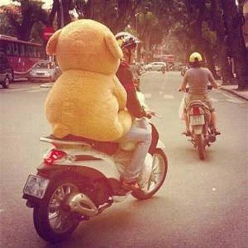 Giới trẻ độc thân rộ mốt chở gấu bông đi chơi
