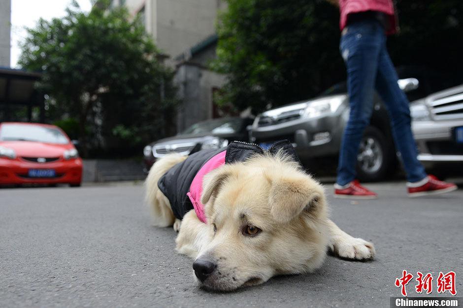 Chú chó bị bỏ rơi nằm đợi chủ cả nửa năm