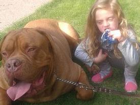 Bé gái 4 tuổi bị chó cưng cắn xé tới chết