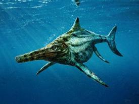 Tìm thấy giống cá lạ -