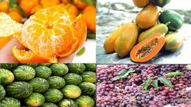 Kinh nghiệm chọn hoa quả ngon và an toàn trong dịp Tết