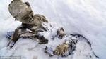 Đi leo núi vấp phải... xác ướp đông lạnh