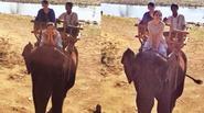 Facebook 24h: Diễm Hương thích thú khi đi cưỡi voi