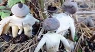Phát hiện loài nấm kì lạ có hình thù giống con người