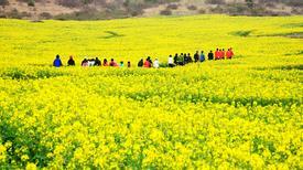8 lễ hội hoa cải nổi tiếng ở Hàn Quốc