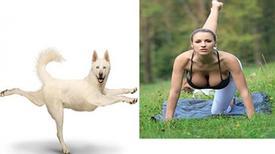 Hài hước bộ ảnh tập yoga cùng động vật