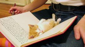 Ảnh hài: Đừng đọc sách nữa, dẫn em đi chơi đi!