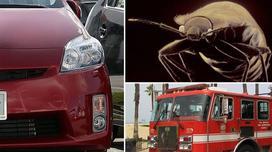 Suýt chết cháy trong xe vì đổ rượu giết… bọ rệp