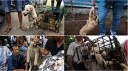 Chú chó con sắp bị giết thịt cầu xin sự quan tâm của con người