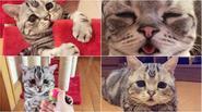 Mèo nhỏ với khuôn mặt đáng thương khiến người khác cũng buồn theo