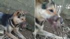 Lại thêm một chú chó bị dán băng keo bịt mõm tại Hà Nội