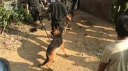 Thảm sát ở Yên Bái: Bàng hoàng, xót xa những hình ảnh ở hiện trường