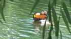 Ép vợ cũ lộ diện, chồng nhấn chìm con gái xuống hồ