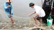 Người Hà Nội rủ nhau đi vợt cá ở sông Kim Ngưu sau trận mưa lớn