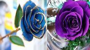 """Cận cảnh 3 loại hoa hồng khiến mọi phụ nữ đều """"thèm muốn"""" dịp 20/10"""