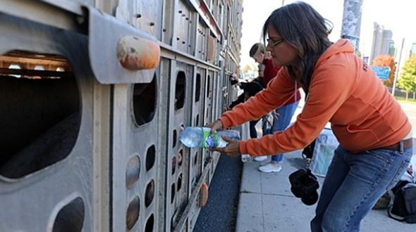 Đối mặt với nguy cơ đi tù 10 năm chỉ vì cho lợn uống nước