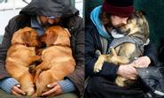 """15 khoảnh khắc """"chó không chê chủ nghèo"""" cảm động nhất thế giới"""