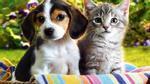 Chó và mèo, con nào yêu chủ hơn?