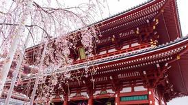 Mùa xuân ngập sắc hoa ở xứ Phù Tang