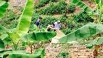 Vụ thanh niên chết ở bụi chuối: Nạn nhân tham gia hỗn chiến?