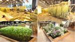 Công ty trong mơ: Nhân viên được trồng cây trái ngay trong văn phòng