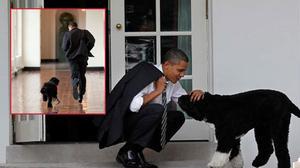 Cận cảnh hai chú chó được Tổng thống Obama hết mực cưng chiều