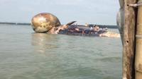 Clip tiếp cận xác cá voi khổng lồ ở bờ biển Nghệ An