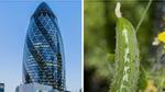 Dưa chuột, vỏ sò trở thành những nguồn cảm hứng để thiết kế nhà chọc trời